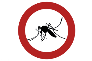 7 conseils pratiques contre l'invasion des moustiques