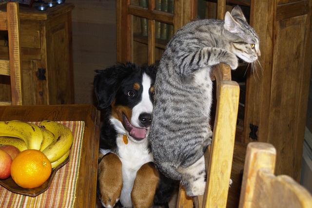 Mogen de hond of de kat van een huurder blijven?
