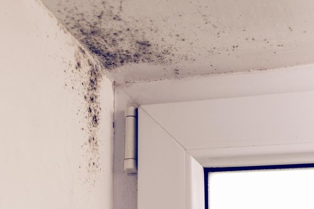 Insolite : Les murs de son logement social dégagent une odeur d'excréments !