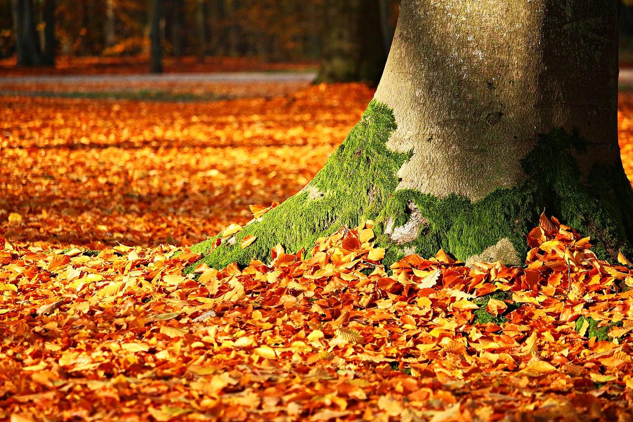 3 ongewone ideeën om gevallen bladeren te hergebruiken