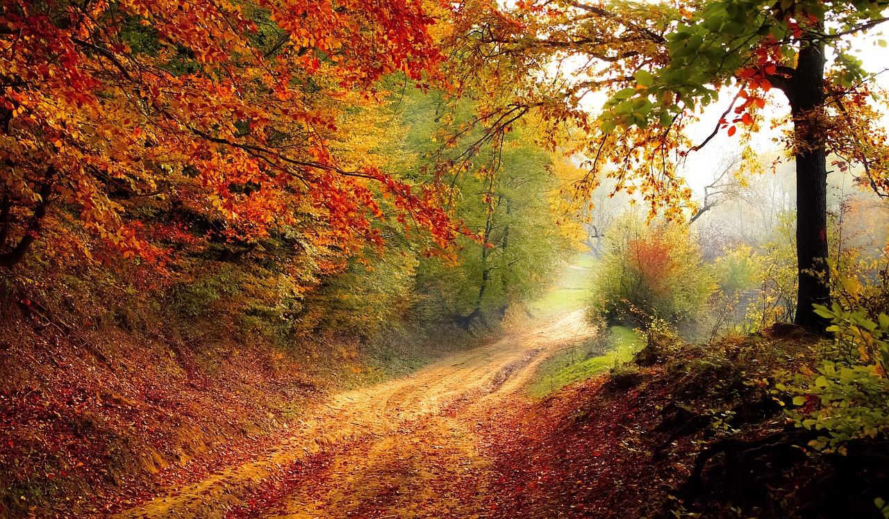 Waarom bladeren in de herfst van kleur veranderen