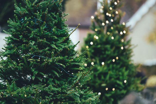 De juiste kerstboom kiezen: 5 tips om niet bedrogen uit te komen