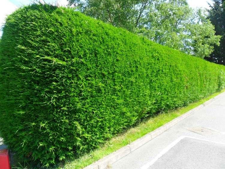 Immovlan.be | Conseils > Nos 7 clôtures préférées pour votre jardin