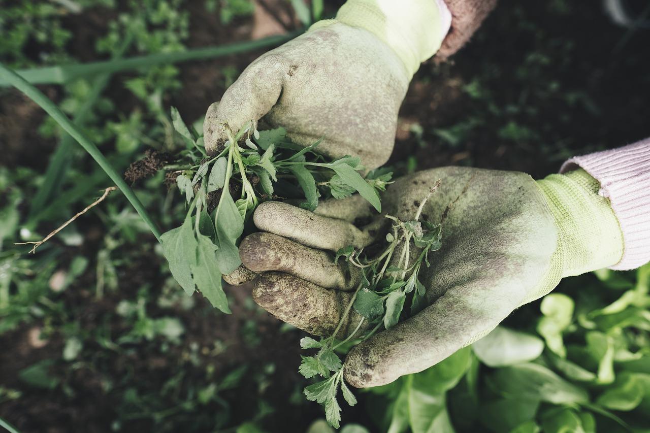 Waarom je handschoenen moet gebruiken om te tuinieren…