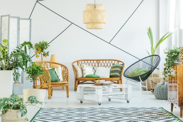 Top 5 planten om je interieur helemaal op te fleuren