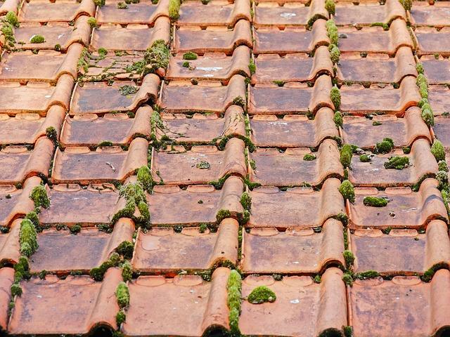 3 conseils pour débarrasser votre toit de la mousse