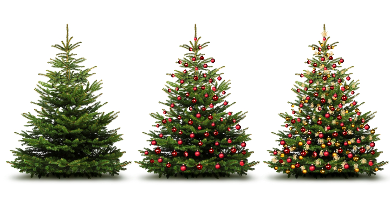 Welke kerstboom kiezen: een valse of een echte? In een pot of niet?