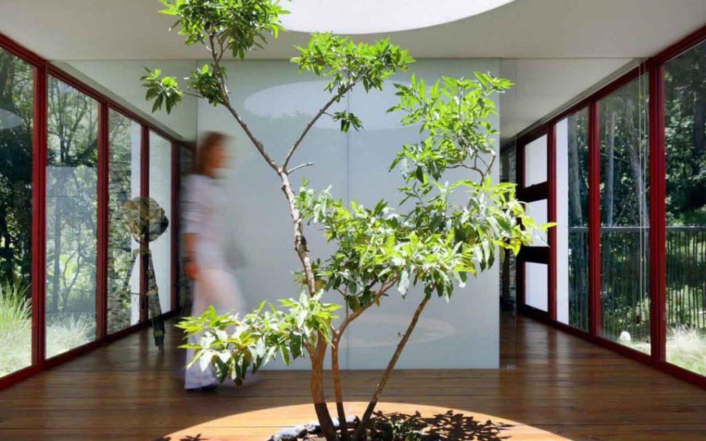 Immovlan.be | Immo Nieuws > 5 huizen met een boom in het interieur ...