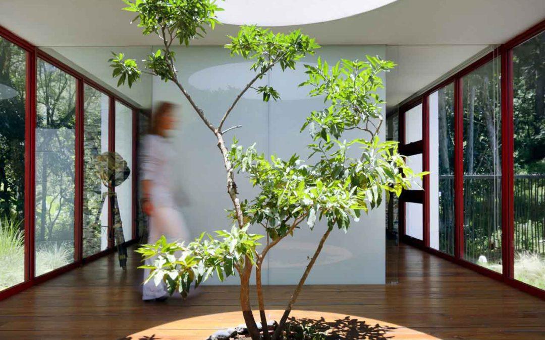 5 huizen met een boom in het interieur