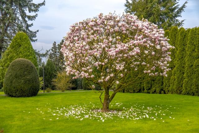 Quel Arbre Ou Arbuste Choisir 5 Arbres Qui Vont