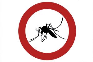 7 handige tips tegen de muggenplaag