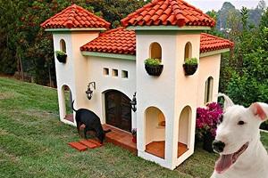 7 niches pour chien très spéciales
