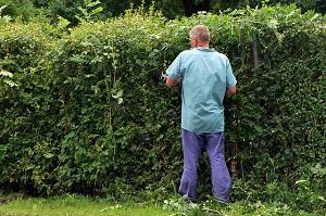 Votre voisin peut-il enlever sans plus la haie entre vos deux parcelles?