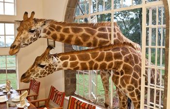 Giraffe Manor Kenya Hotel Insolite