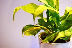 Garder vos plantes en vie pendant votre voyage: 4 erreurs à éviter