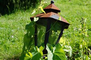 Verwilderde tuin bij het einde van de huur? Doe dan dit