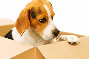 Verhuizen met je hond: zo pak je het aan
